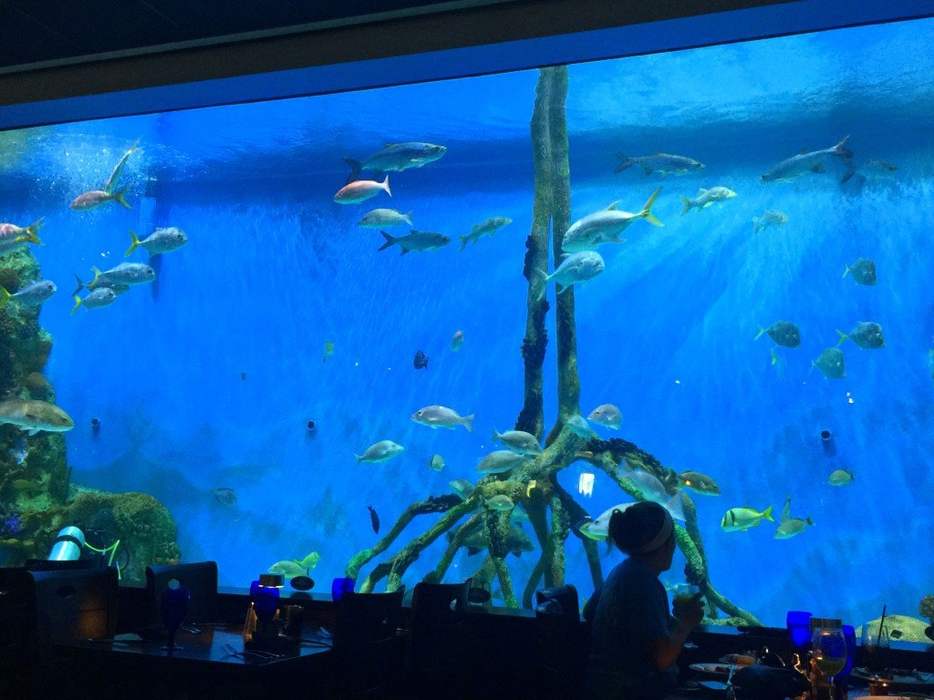 Largest tank by TANKED at RumFish