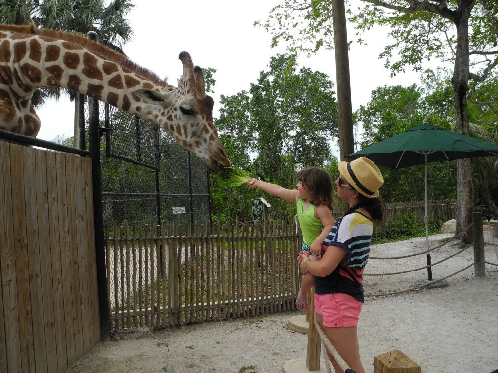 Kid feeding Giraffe at Naples Zoo