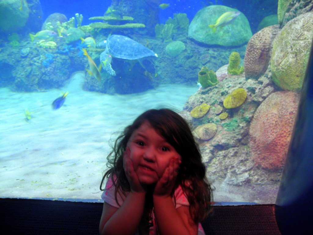 SeaWorld San Diego Fish Tank