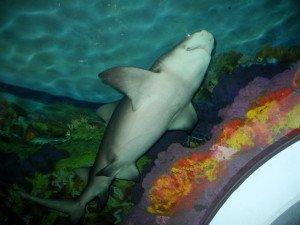 SeaWorld San Diego Shark Tank
