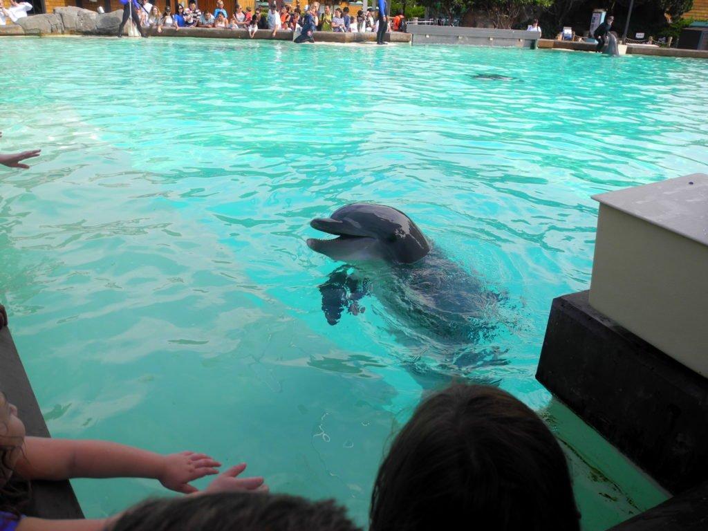Dolphin Show SeaWorld San Diego