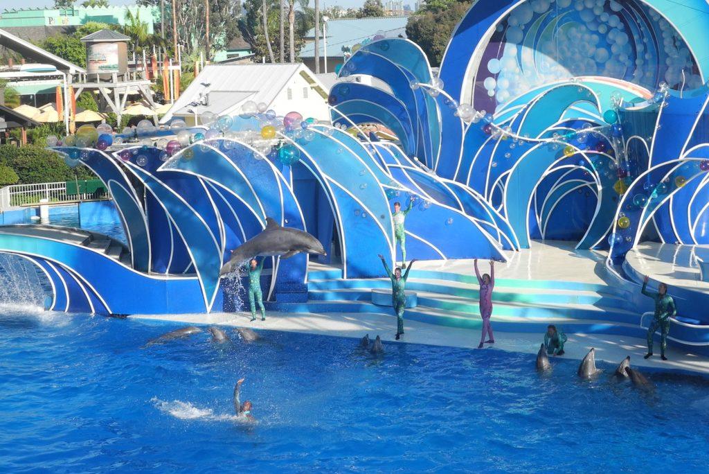Dolphin Days SeaWorld San Diego