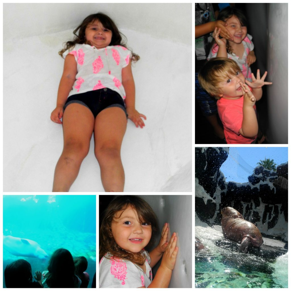 kid fun at SeaWorld San Diego