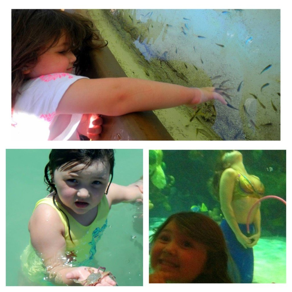 Letting the little fish nibble, finding a crab and meeting a mermaid