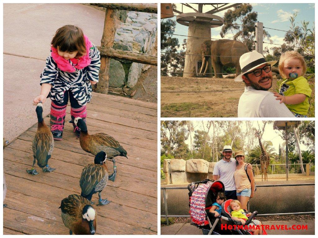 Animals at Zoo & Safari Park