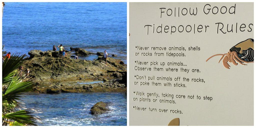 Laguna Beach tidepool