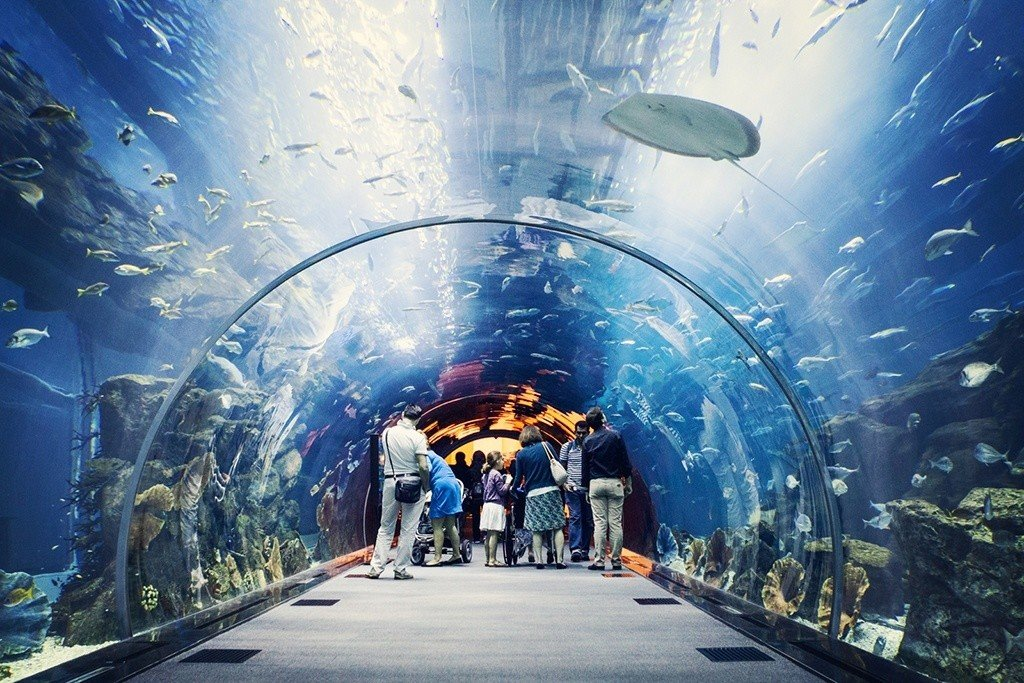 Dubai Aquarium with family