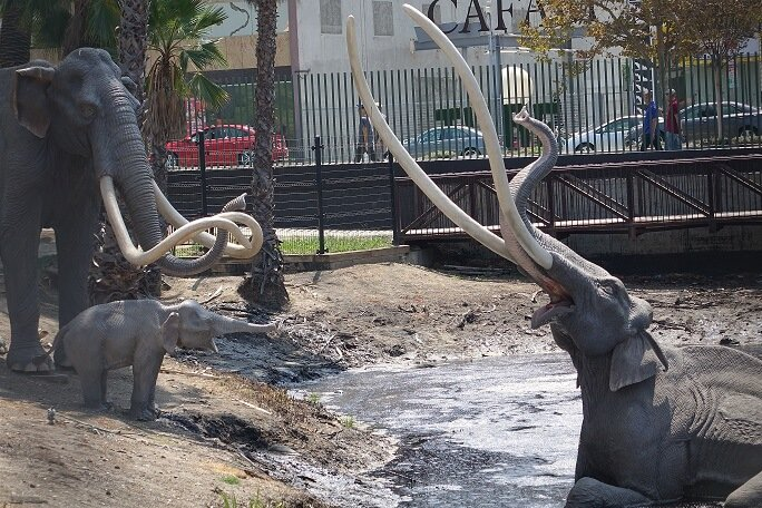 La Brea Tar Pits display of mammoths