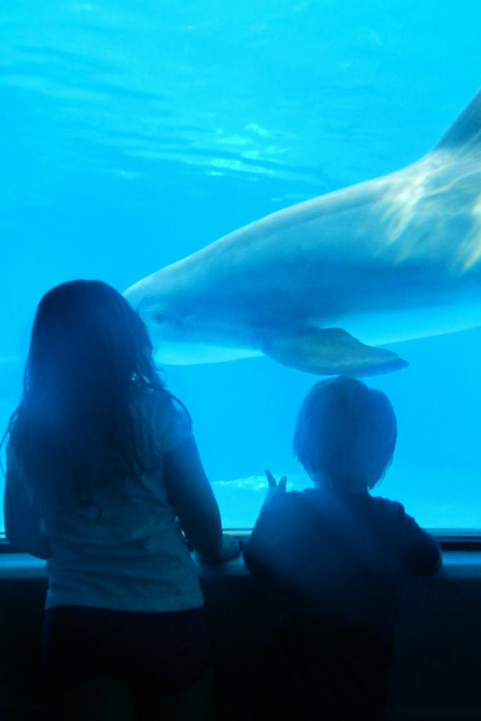 The Secret Garden and Dolphin Habitat, located at The Mirage, is a must every visit.
