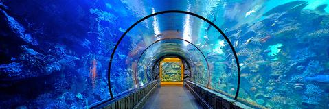 Shark Reef Aquarium at Mandalay Bay Las Vegas for Families