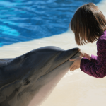 Kid friendly Vegas Hotel with Dolphins