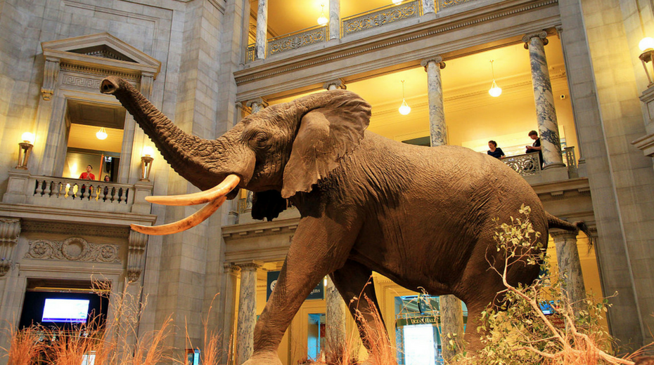 Washington National History Museum