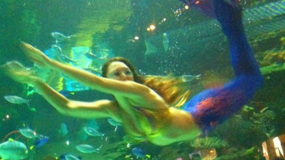 Mermaid at Silverton Las Vegas