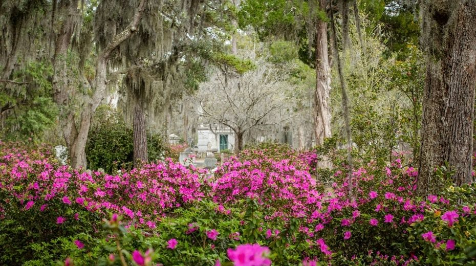 Bonaventure Cemetery visiting Savannah with kids