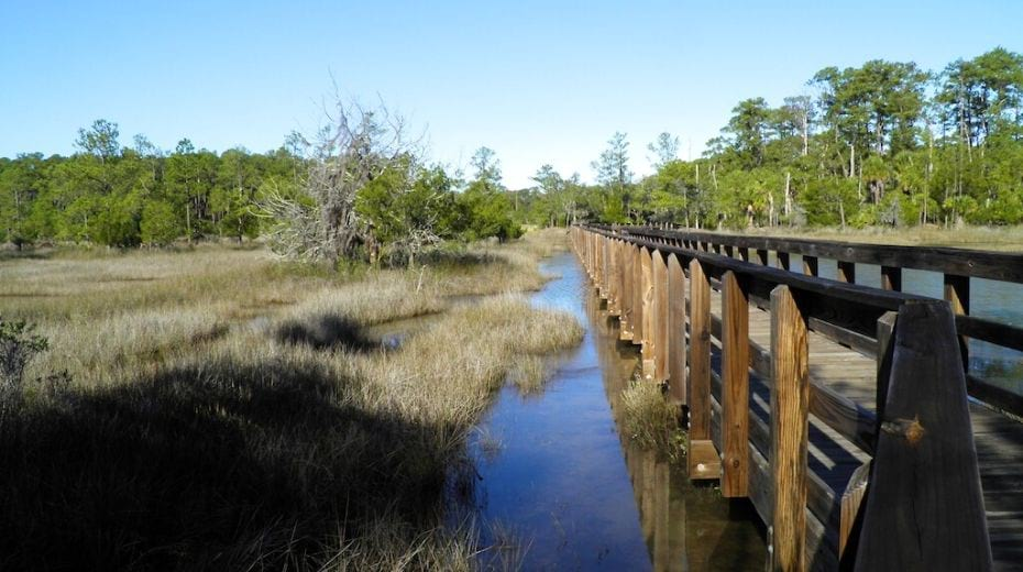 Things to do in Savannah with kids Skidaway Island State Park trails