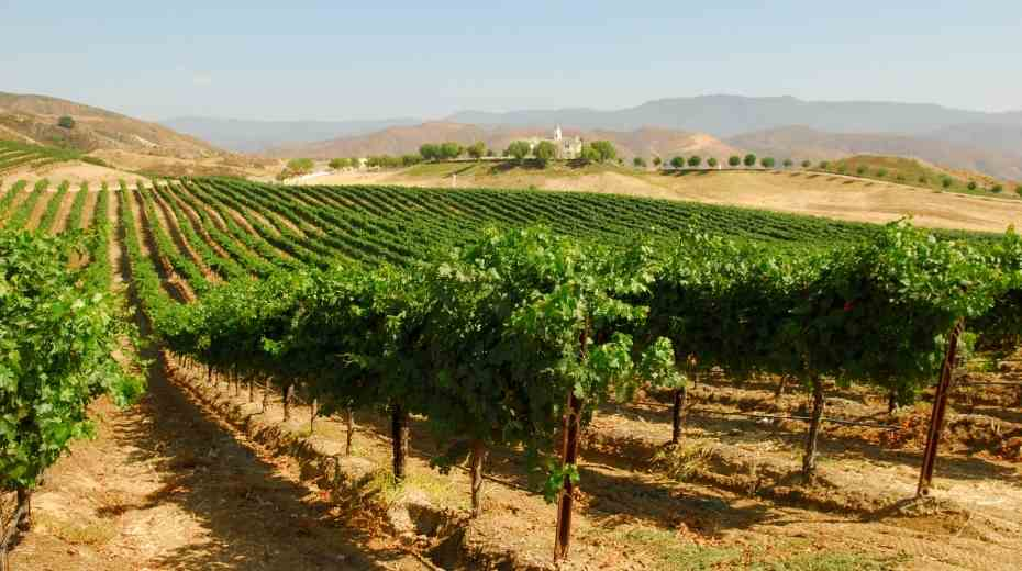 5 Unique Temecula Wine Tours that include Lunch
