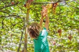 Best kid-friendly wineries in Temecula